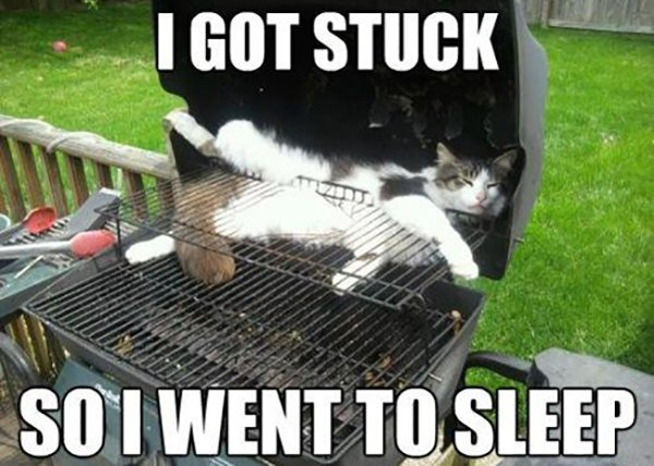 cat sleeping in barbeque