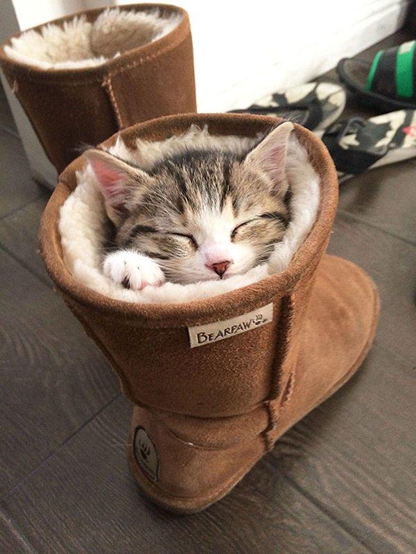 cat sleeping in boot