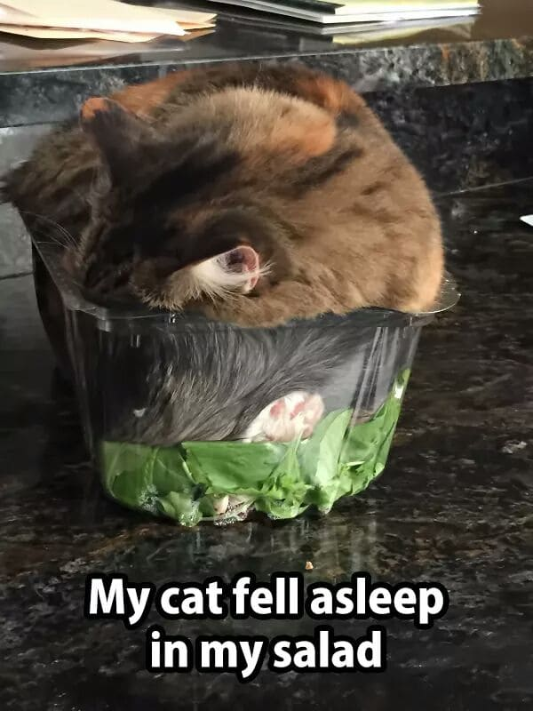 cat sleeping in salad