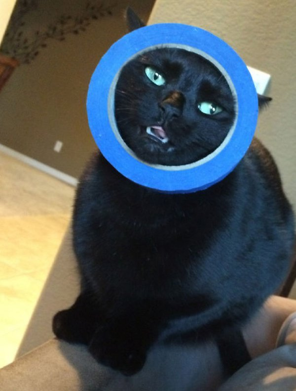 cat with face stuck in tape