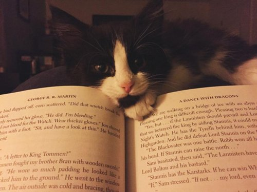 cats-and-books-nose