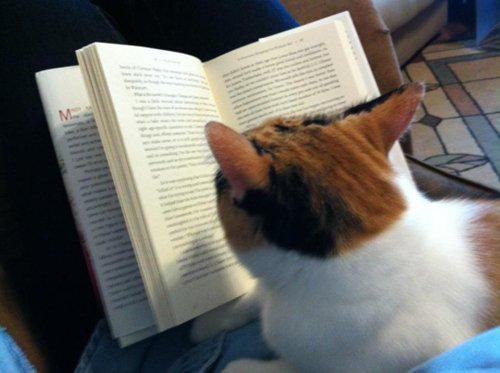 cats-and-books-tortie