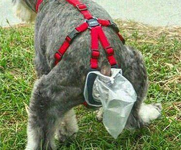 dog-poop-collector-trap