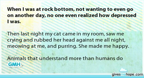 gives-me-hope-cat-depressed