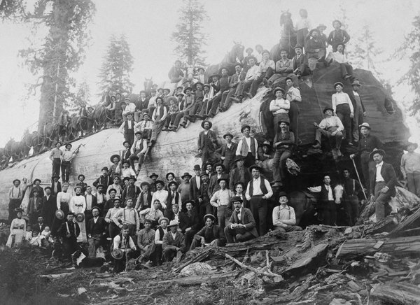 historical-photos-100-plus-with-giant-sequoia-1917