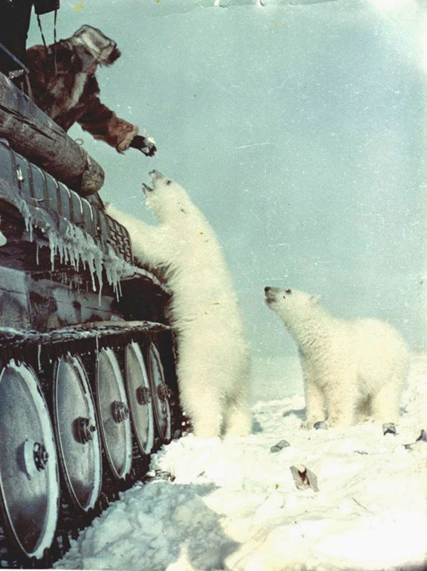 historical-photos-soldiers-feeding-polar-bears-1950
