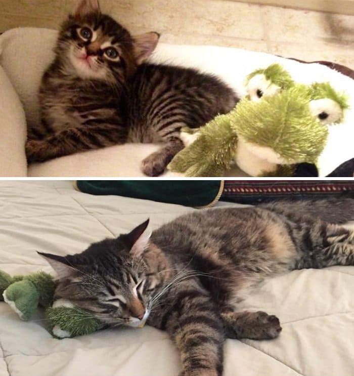 kitty-and-frog