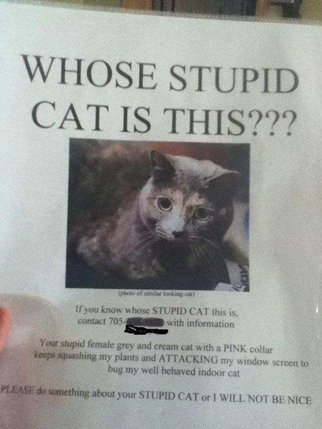 passive-agressive-cat