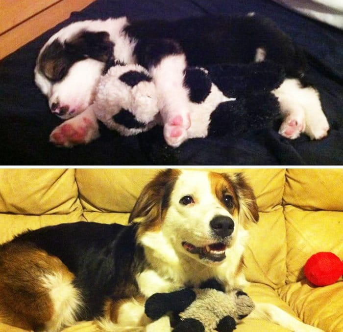 puppy-and-now
