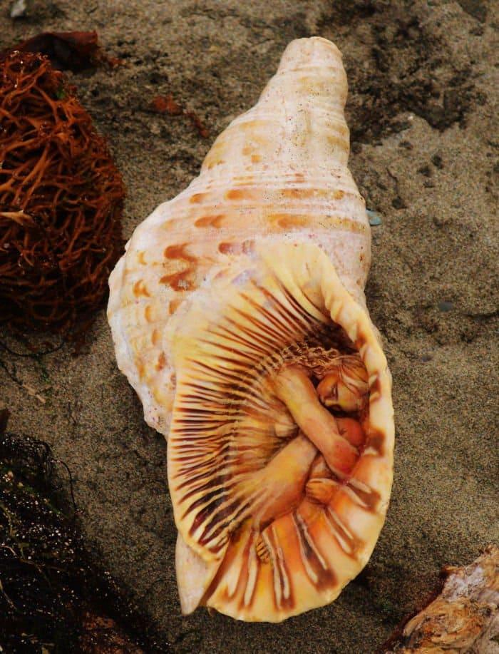 sculptures-debra-bernier-shell