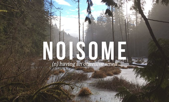 underused-words-smelly-noisome