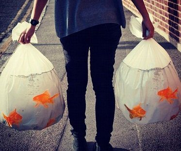 goldfish-bowl-trash-bags