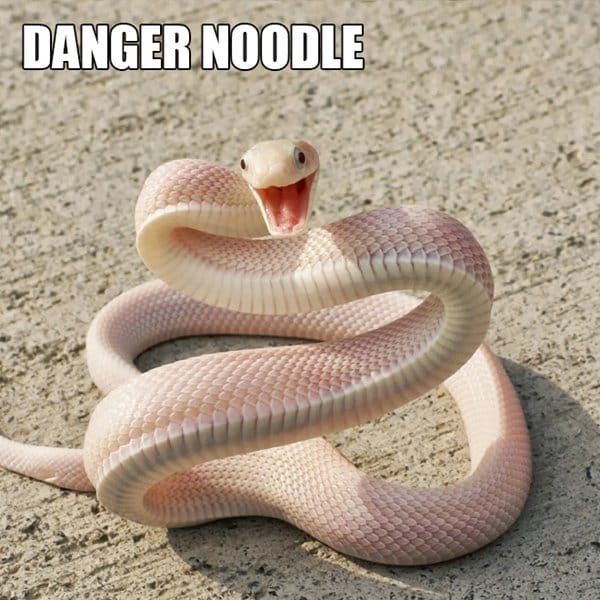 alternative-animal-names-danger-noodle-snake