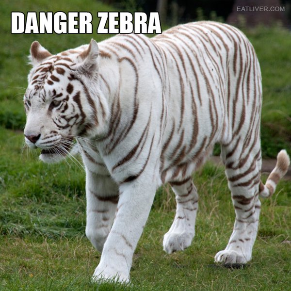 alternative-animal-names-danger-zebra-white-tiger