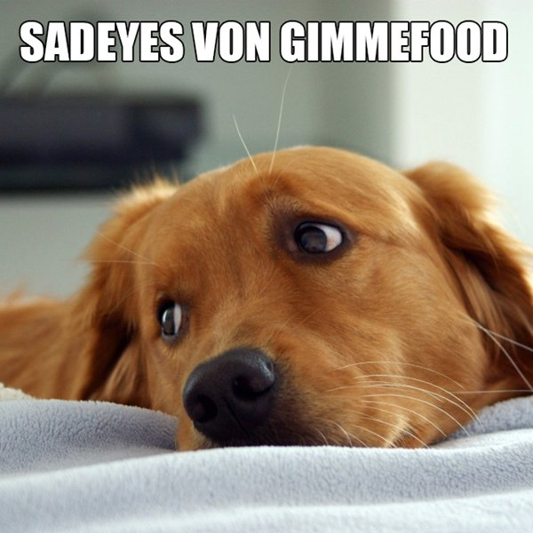 alternative-animal-names-dog-sadeyes-von-gimmefood