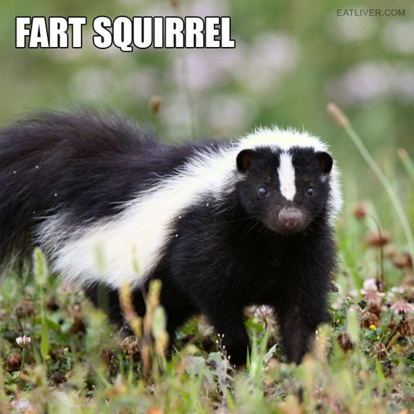alternative-animal-names-fart-squirrel-skunk