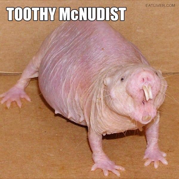 alternative-animal-names-naked-mole-rat-toothy-mc-nudist