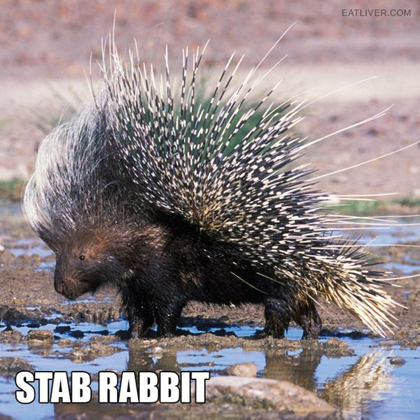 alternative-animal-names-porcupine-stab-rabbit