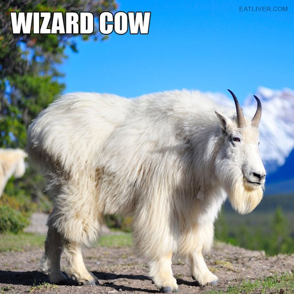 alternative-animal-names-wizrd-cow