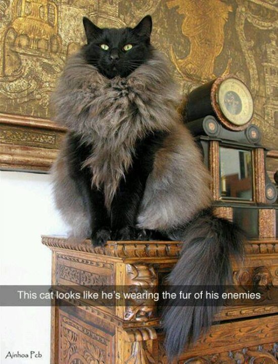 animal-snapchats-cat-fur-of-enemies