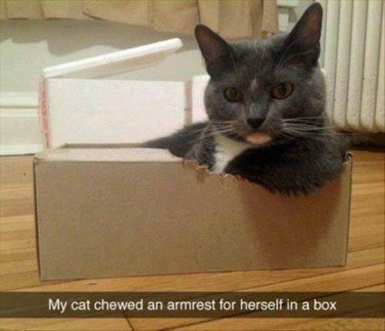 animal-snapchats-diy-cat-armrest