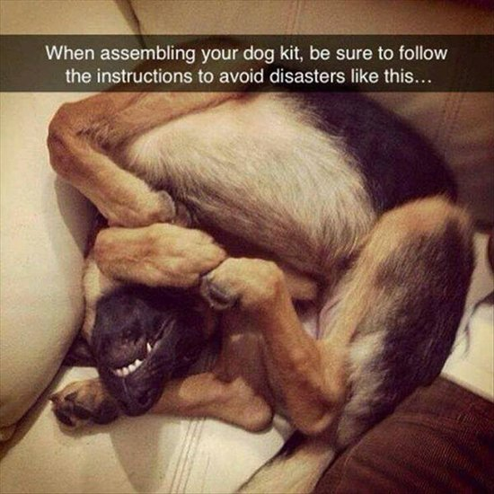 animal-snapchats-dog-assembly