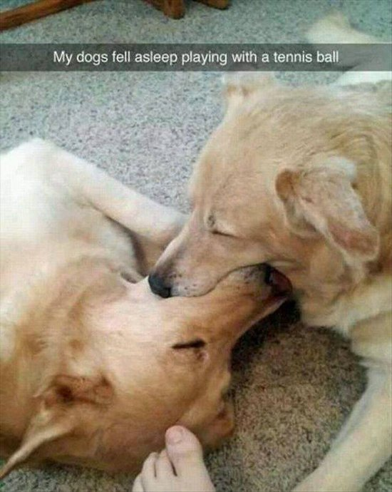 animal-snapchats-dog-sleep-with-ball