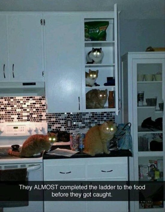 animal-snapchats-food-ladder-cats