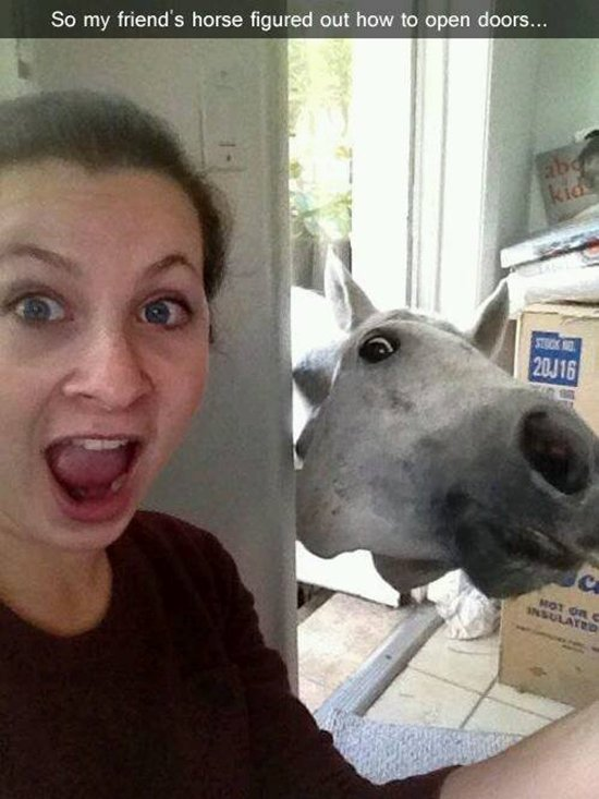 animal-snapchats-horse-open-doors