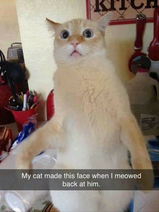 animal-snapchats-meow-back-cuss-out-mom