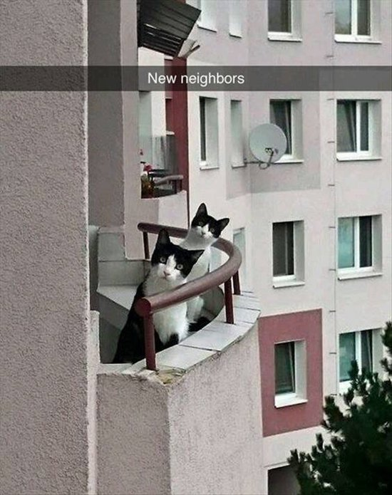 animal-snapchats-neighbor-cats