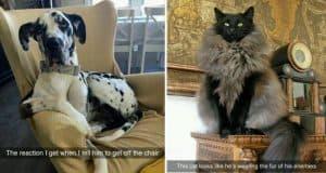animal-snapchats-part-two