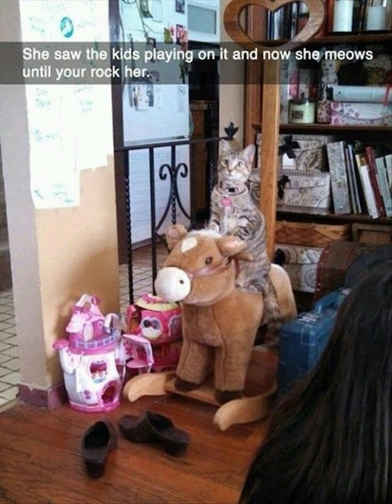 animal-snapchats-rocking-horse-cat