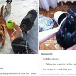animal-tumblr-part-one
