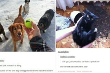 animal-tumblr-part-one