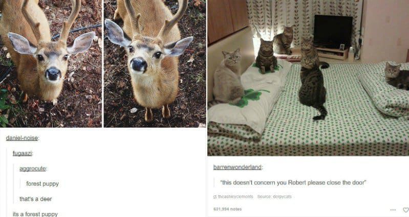 animal-tumblr-part-two
