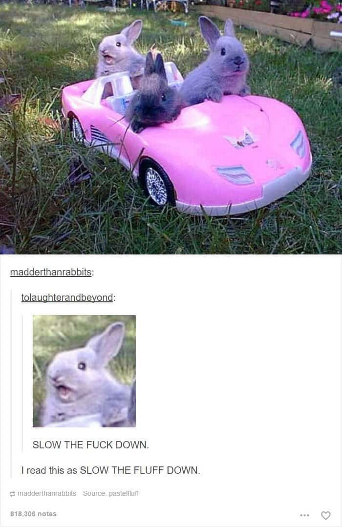 animal-tumblr-posts-bunny-convertible