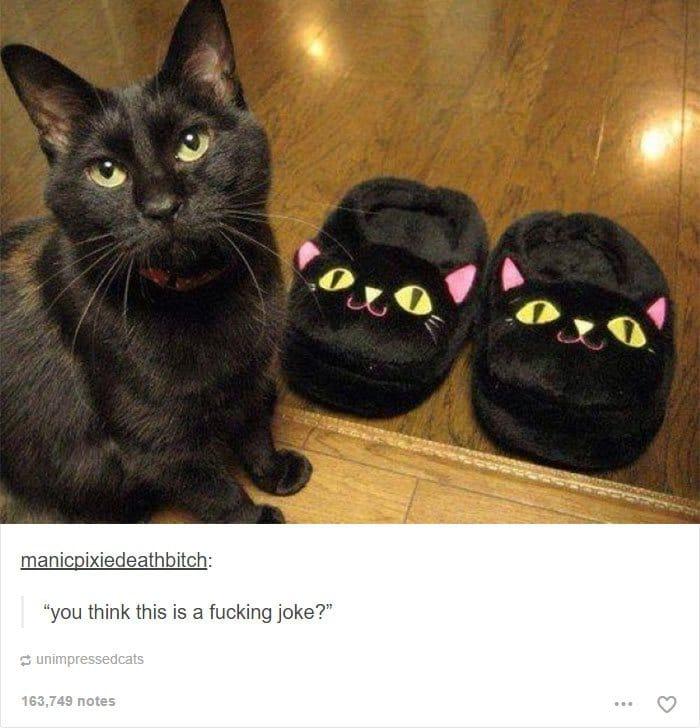 animal-tumblr-posts-cat-slippers-joke