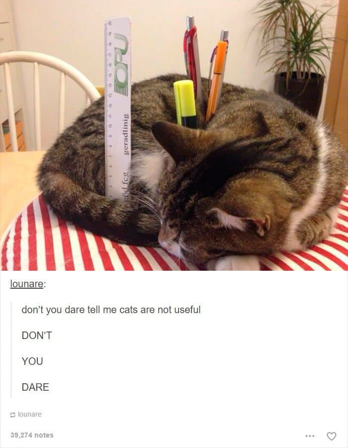 animal-tumblr-posts-cats-are-useful