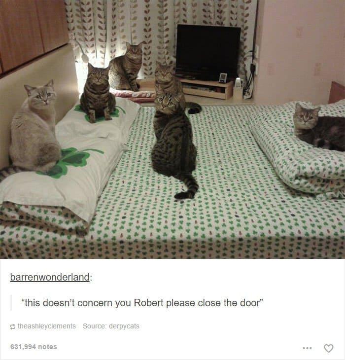 animal-tumblr-posts-cats-bed-close-the-door-yeah-robert