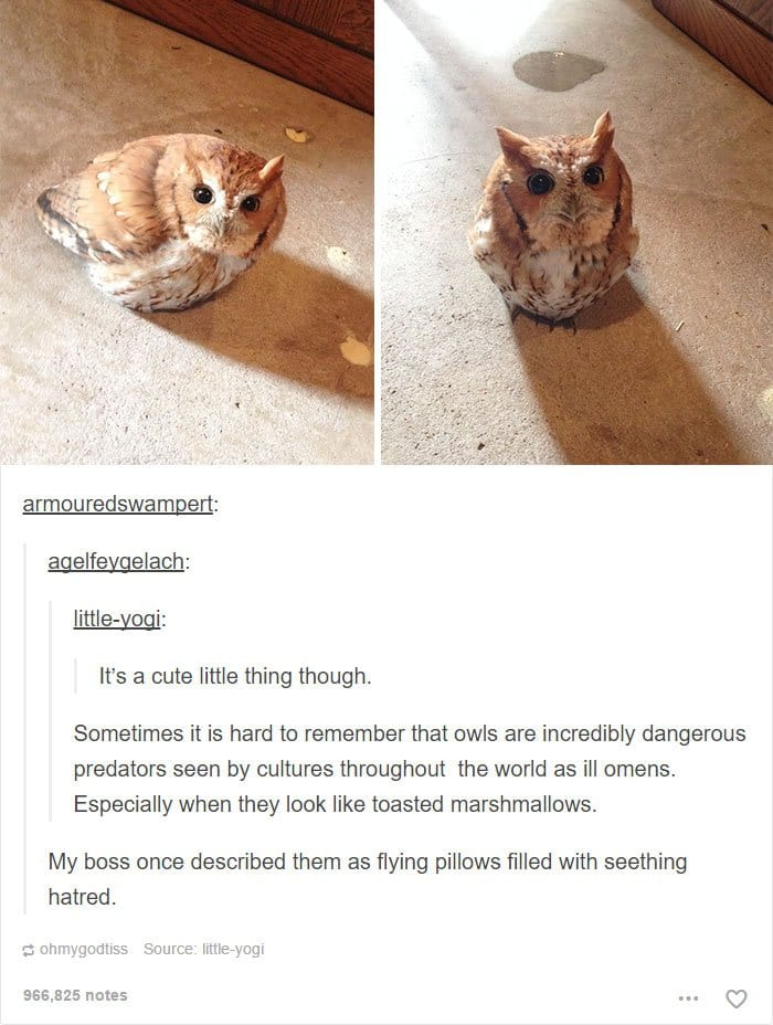 animal-tumblr-posts-cute-ols-deadly