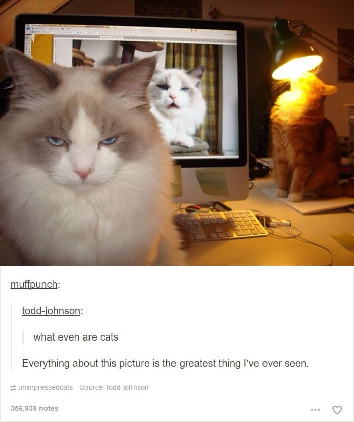 animal-tumblr-posts-funny-cats