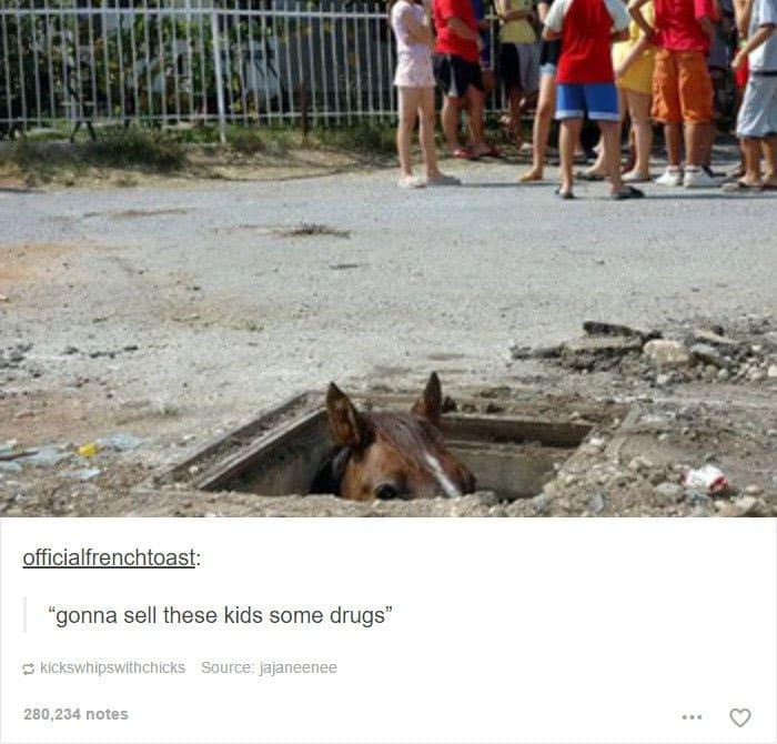 animal-tumblr-posts-horse-sell-drugs