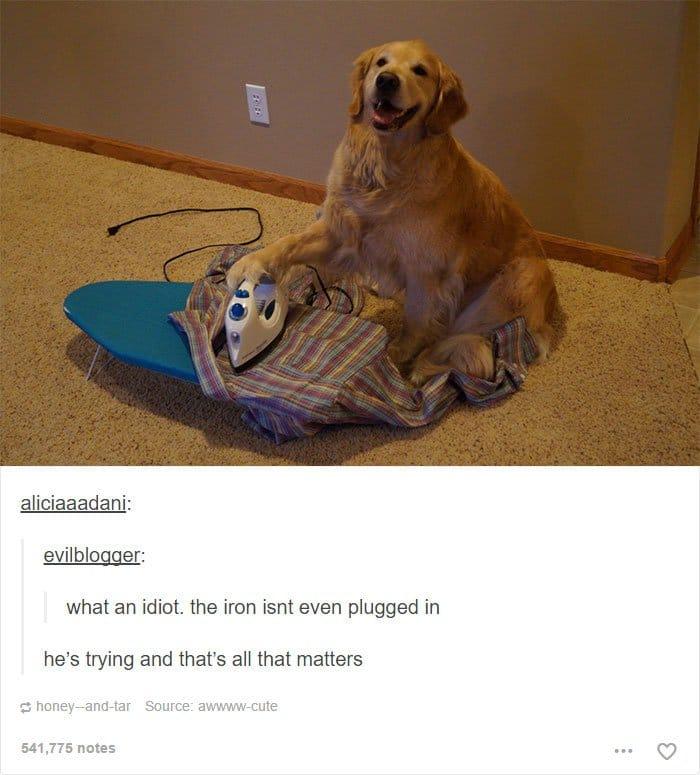 animal-tumblr-posts-ironing-dog
