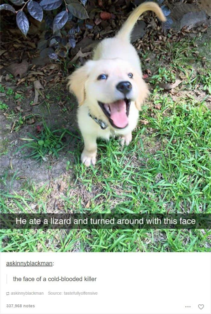 animal-tumblr-posts-killer-pup-cute