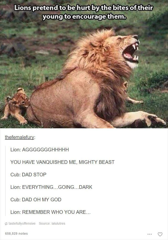 animal-tumblr-posts-lion-going-dark