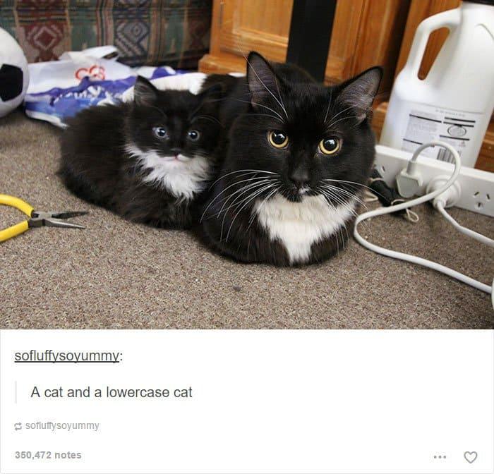 animal-tumblr-posts-lowercase-cat