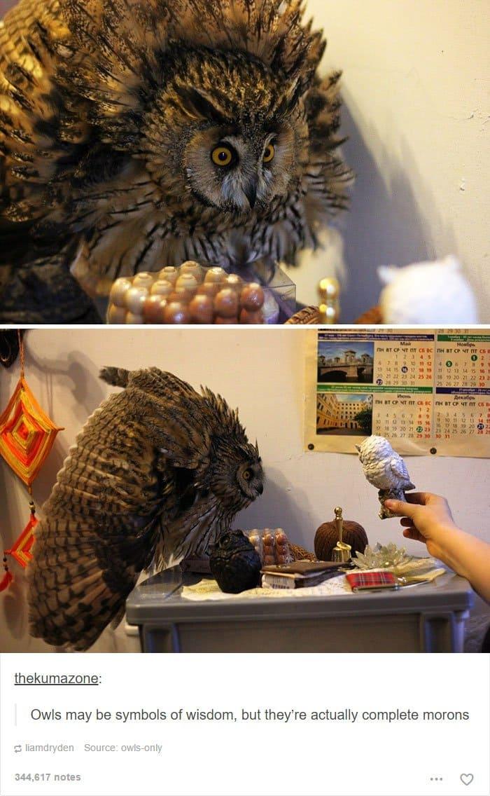 animal-tumblr-posts-moron-owl