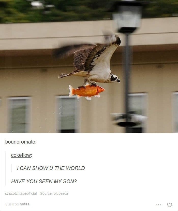animal-tumblr-posts-raptor-fish-way-up-here