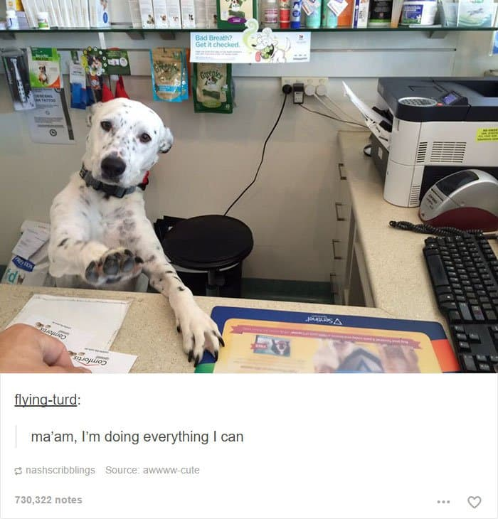 animal-tumblr-posts-reception-dog